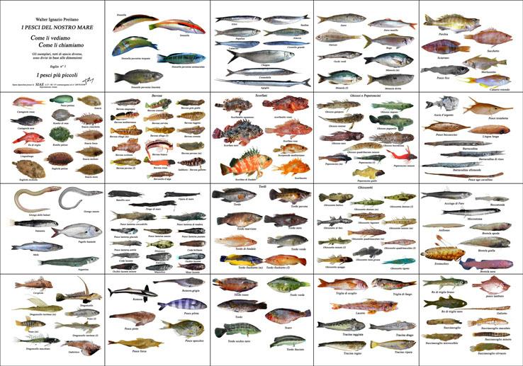 Poster dei pesci - Pagina di colorazione del pesce ...